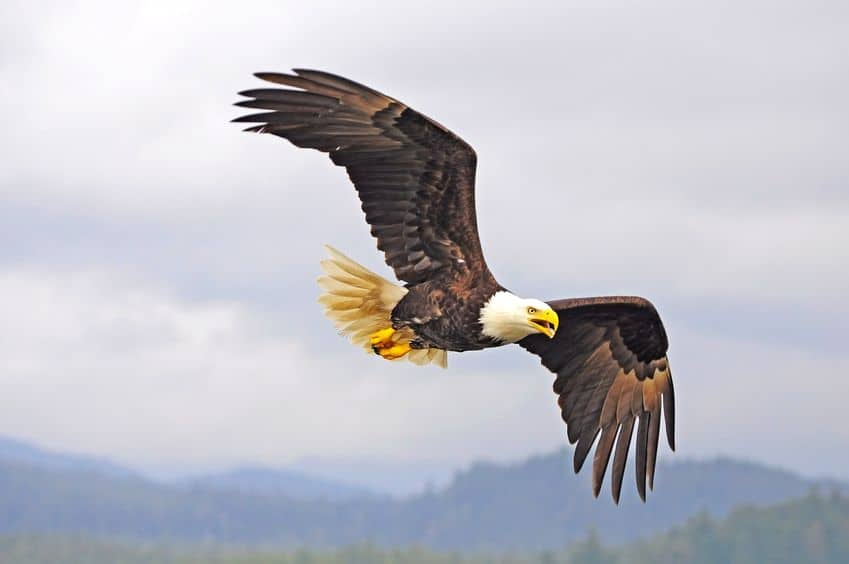 Food for Thought ~ Eagles in a Storm