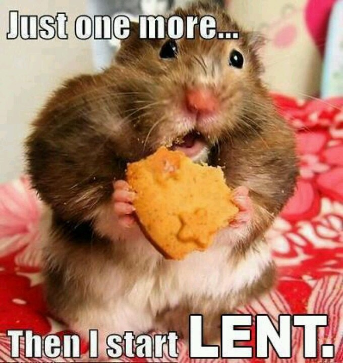 "hamster eating a cookie with text ""just one more...then I start LENT."""